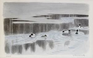 Sjöfåglar by Gunnar BRUSEWITZ