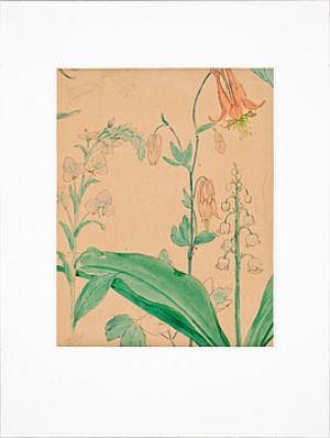 Växter Och Blad by Hans Andersen BRENDEKILDE