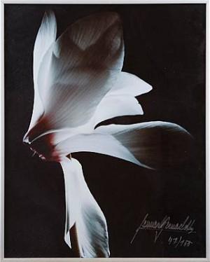Orkidé by Lennart BERNADOTTE