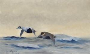 Ejderpar över Havet by Bruno LILJEFORS