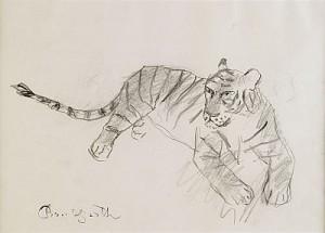 Tiger by Bror HJORTH