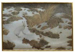 Hare I Vinterlandskap by Lennart SAND