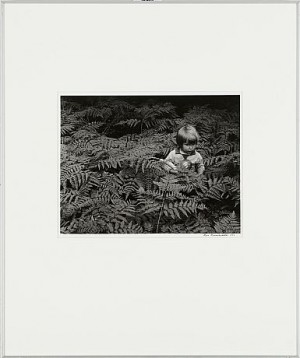 A Boy Among Ferns 1957 by Hans HAMMARSKIÖLD