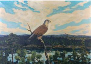 Rovfågel by Emil NORDBERGER