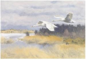 Sträckande Svanar I Höstlandskap by Bruno LILJEFORS