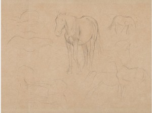 Horse Studies by Edgar DEGAS