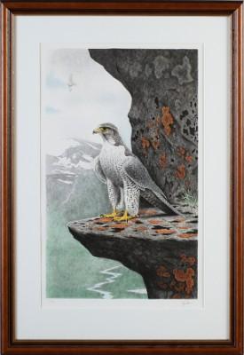 Rovfågel På Klippa by Staffan ULLSTRÖM