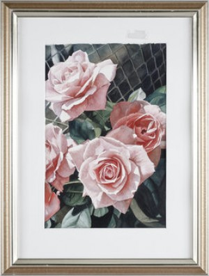 Rosa Rosor by Stephen CLARK