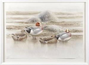 Sjöfågel På Kobbe by Lars JONSSON