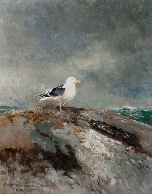 Backed Gull by Mosse STOOPENDAAL