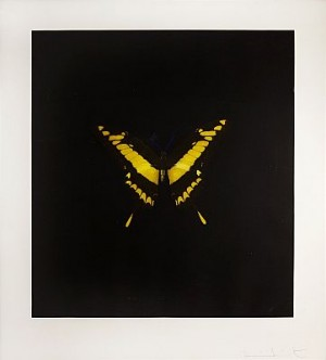 Butterfly Yellow by Damien HIRST