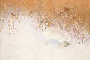 Hare I Vinterlandskap by Bruno LILJEFORS