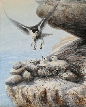 Pilgrimsfalk by Rune JOHANSSON