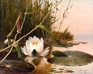 Water Lily by Yuliy Yulyevich KLEVER