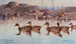 A Family Of Wild Ducks by Ejnar KOHLMANN