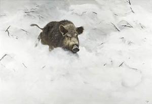 Vildsvin I Vinterlandskap by Lennart SAND