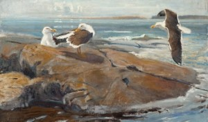 Seagulls by Lennart SEGERSTRÅLE